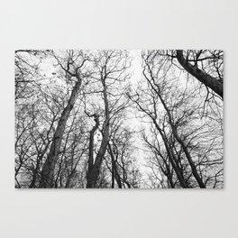 arbres de versailles Canvas Print