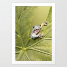 White's Tree Frog Art Print