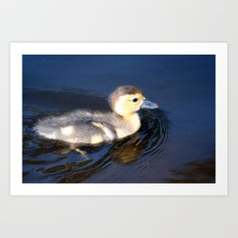 Cute Duckling Swimming in a Pond Art Print