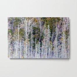 a frame of trees Metal Print