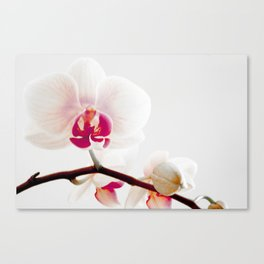 The Orchid that Refused to Sit Still Canvas Print
