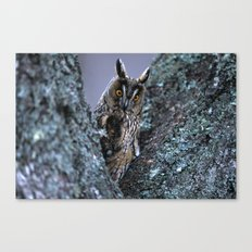 LONG-EARED OWL BETWEEN BRANCHES Canvas Print