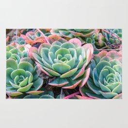 Succulent Garden Vibrant Pastel Rug