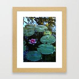Lilypad Framed Art Print
