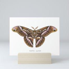 Ailanthus Silkmoth (Samia cynthia) Mini Art Print