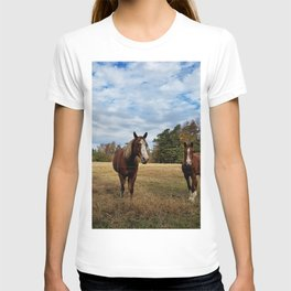 Two Horse Amigos in Pasture T-shirt