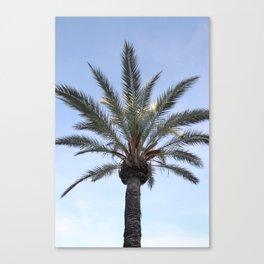 Palma - Matteomike Canvas Print