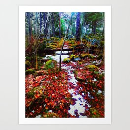 A Path in a Forest Art Print