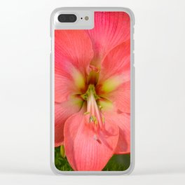 Amaryllis by Teresa Thompson Clear iPhone Case