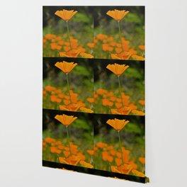 Tall Poppy Wallpaper