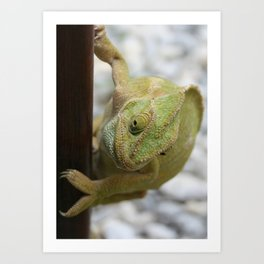 Chameleon: Fifty Shades of Green Art Print