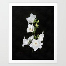 White bell Art Print