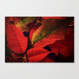 Christmas Plant Canvas Print