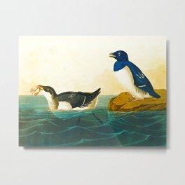 John Audubon Little Auk Metal Print