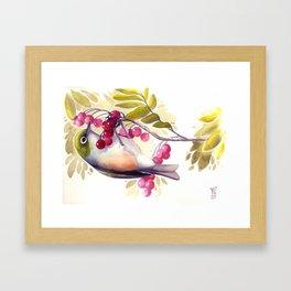 Silvereye Framed Art Print