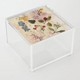 Botanical Study #1, Vintage Botanical Illustration Collage Acrylic Box
