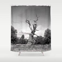 Old Tree Westonbirt Arboretum Cotswolds England Shower Curtain