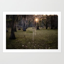 Sun Rise in the Swamps of Home Art Print