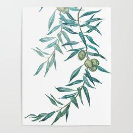 green olive leaf watercolor Poster