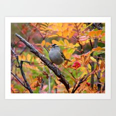 Bird in Autumn Foliage Art Print