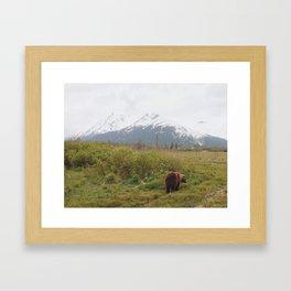 On the prowl. Framed Art Print