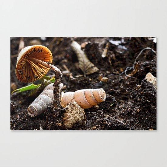 The Shell Game Canvas Print