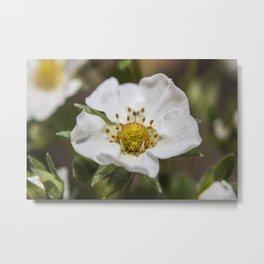 Strawberry Blossom Metal Print