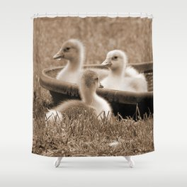 Three little goslings wildlife in the morning while drinking in the meadow in sepia Shower Curtain