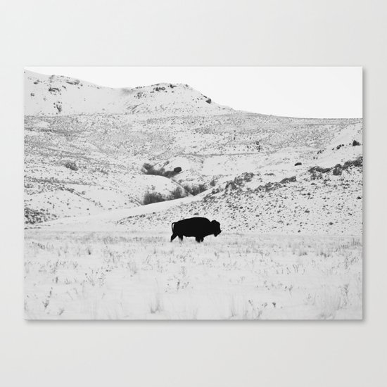 Black and White Bison Canvas Print