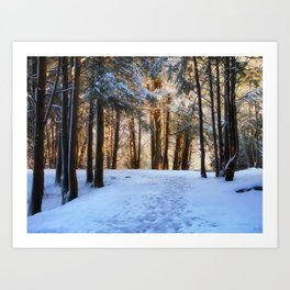 A Winter Morning in the Woods Art Print