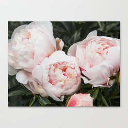 Flower Photography | Peonies Cluster | Blush Pink Floral | Peony Canvas Print