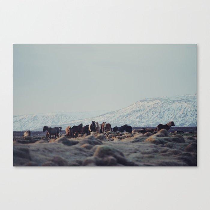 Icelandic Horses II Canvas Print