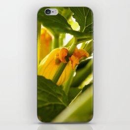 Zuchini Blossom Photography Print iPhone Skin