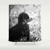 poodle Shower Curtains featuring Poodle Painting by TheWildPlum