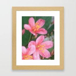 Key West Pink Framed Art Print