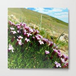 Watercolor Flower, Moss Campion 03, St Mary's Glacier, Colorado Metal Print