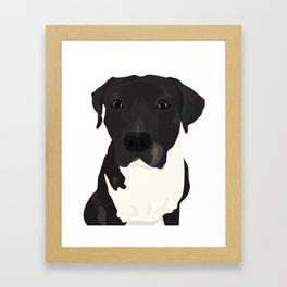Atticus the Pit Bull Framed Art Print