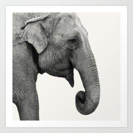 Elephant Animal Photography Art Print