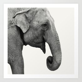 Elephant Animal Photography Art Print