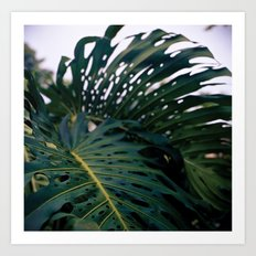 Holy Palms Art Print