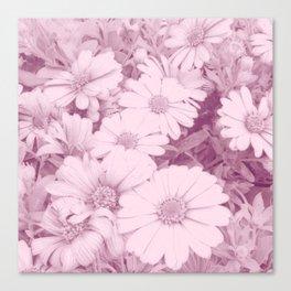 Elegant blush pink white daises botanical floral Canvas Print