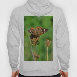 COMMON BUCKEYE BUTTERFLY IN THE FALL (Close-Up) Hoody