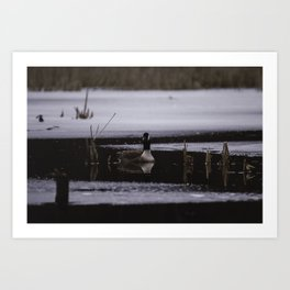 Canadian Geese on frozen lake Art Print