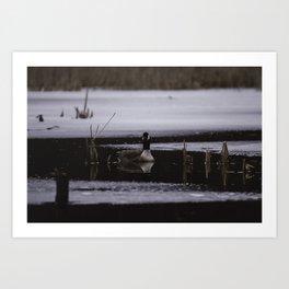 Canadian Geese on frozen lake Art Print