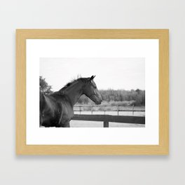 Bubba in Black and White Framed Art Print