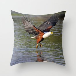 African fish eagle fishing in a river - Africa wildlife Throw Pillow