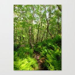 Woodland - Fern - Path Canvas Print