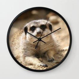 Meerkat 2014-0901 Wall Clock