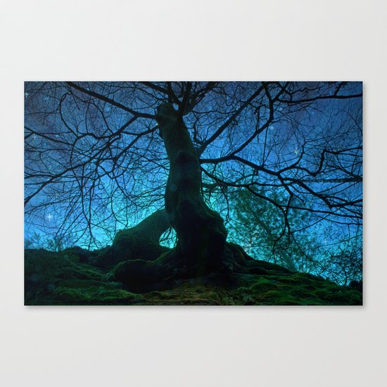 Tree under a spangled sky (light) Canvas Print
