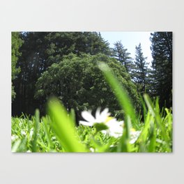 Down In It Canvas Print